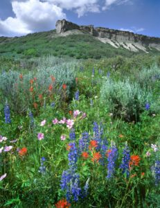 Wildflowers Colorado